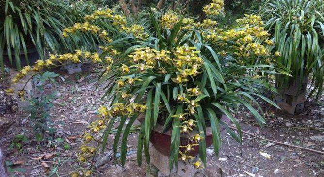 Top 5 loài hoa đẹp nhất ở Sapa-Kinh nghiệm du lịch Sapa