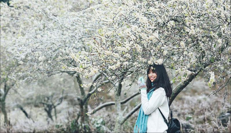 Du lịch Mộc Châu tháng 2 nồng nàn hương sắc mùa hoa mận -3