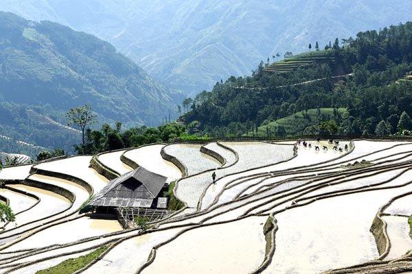 Chiêm ngưỡng ruộng bậc thang Hà Giang