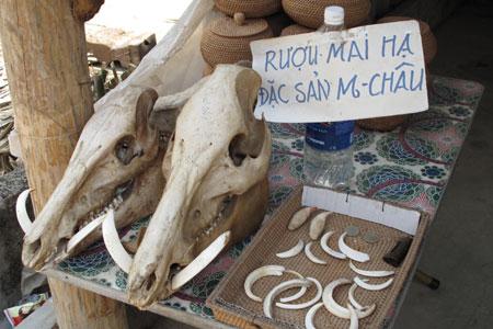 tour-du-lich-mai-chau-hoa-binh-1-ngay-sieu-khuyen-mai-cho-hoc-sinh-khach-doan