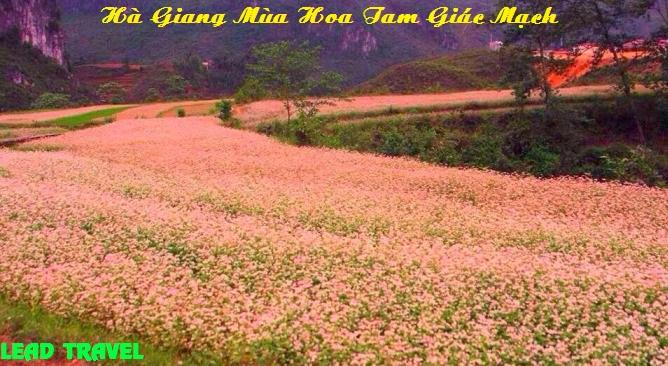 Tour Hà Giang mùa hoa tam giác mạch