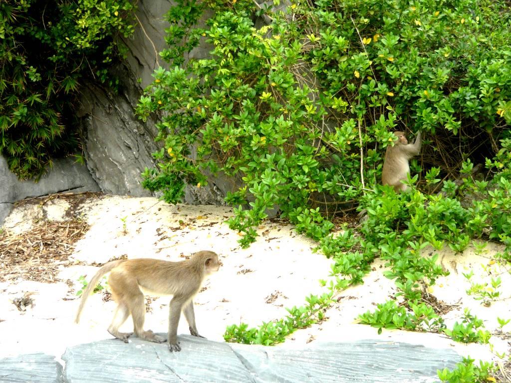 Du lịch Cát Bà-Khám phá đảo Khỉ vào mùa hè