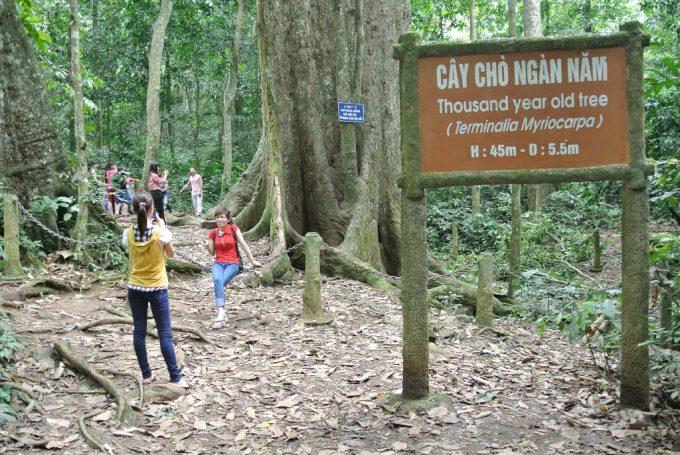 Tour Du Lịch Rừng Cúc Phương 2 Ngày 1 Đêm Giá Rẻ
