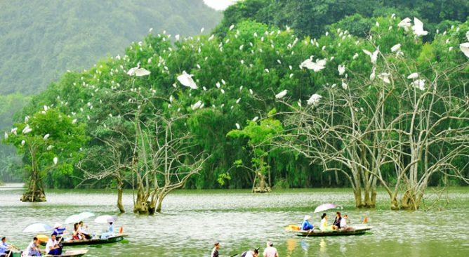 Tour Du Lịch Vườn Chim Thung Nham Ninh Bình 2 Ngày 1 Đêm