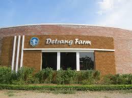 Tour Du Lịch Trải nghiệm Nông Trại Giáo Dục Dê Trắng 1 Ngày khám phá Detrang Farm