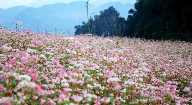 Tour Du Lịch Tuyên Quang-Hà Giang 4 Ngày 3 Đêm Giá rẻ