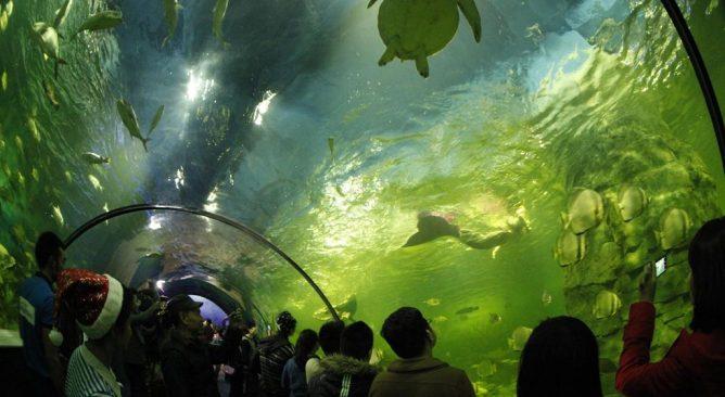 Tour du lịch Thủy Cung Times City 1 ngày