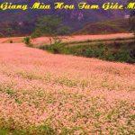 Tour Hà Giang 3 ngày 2 đêm Giá Rẻ Với 10 Ưu điểm nổi bật