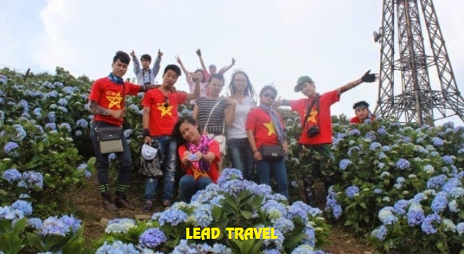 du lịch Mẫu Sơn ngắm hoa cẩm tú cầu