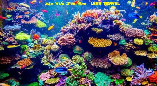 du lịch đảo Hòn Mun Nha Trang