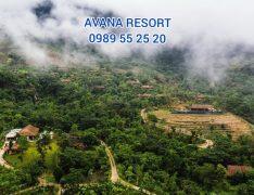 avana resort