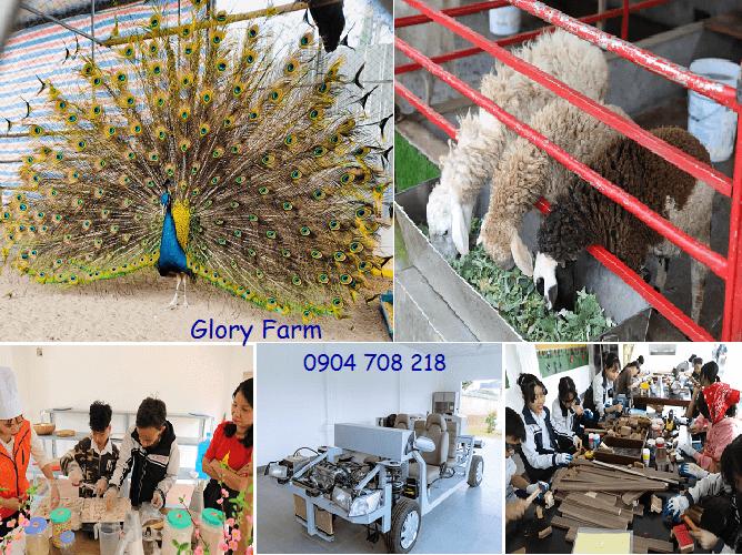 glory farm sơn tây